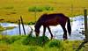 Electric fence HFF (Sizun Eye) Tags: horse icelandic islandais cheval fence cloture electric iceland northerneurope europe europedunord islande sizuneye tamron2470mmf28 nikond750 hff fencefriday happyfencefriday friday meadow