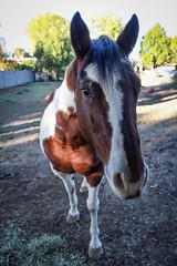 Horsin' around! (jakemartin7) Tags: 11mm canon wideangle mammals animals life photography nature horses