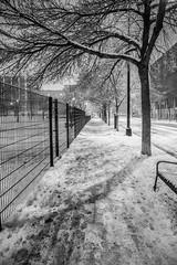 Footsteps (Fret Spider) Tags: chicago downtown greektown night street city urban snow weather light winter fun outside nature outdoors canoneos5dmarkiii canonef24mmf14liiusm westloop marybartelmepark dogpark neighborhood home swirl snowman mono blacknwhite blackandwhite monochrome bw toned