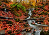 """If you see a falling leaf """"remember me"""" you said. You know i...loved you in autumn (acipinarli) Tags: autumn leaves waterfalls red fall"""