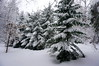 DSC02244_3 (aleksey1971) Tags: siberia altai belokurikha winter nature forest landscape tree snow сибирь алтай белокуриха зима природа пейзаж лес снег