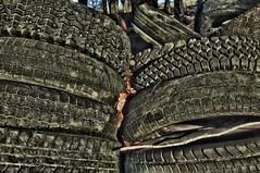 Alte Reifen zum Beschweren der Silo-Abdeckung; Bergenhusen, Stapelholm (6a) (Chironius) Tags: stapelholm bergenhusen schleswigholstein deutschland germany allemagne alemania germania германия niemcy landwirtschaft reifenprofil