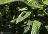 Like a bee (DGS_closetoyou) Tags: nature green beautiful bee life forest dgs closetoyou