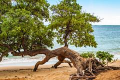Trying to get in! (FotoMemi) Tags: wailua kauai nikond70 scenery flickr d70 digital beach nikon nikkor nikondx dx surf