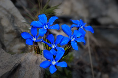 Flora60