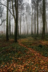 Kingley_Vale_Jan_2017_32.jpg (Laura Morgan Photography) Tags: chichester england ancientforest landscape kingleyvale