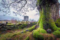 Fairytale Castle (sianowen6) Tags: sky grey stone llanberis snowdonia northwales landscape moss green tree dolbadarncastle rain