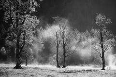 Steam (sinnesblicke) Tags: ahornboden tirol österreich austria sony sonyrx100m3 nature landscape trees outdoor herbst autumn blackandwhite