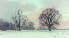 Winter Trees (MartinFechtner-Photography) Tags: trees bäume winter grafschaftbentheim nordhorn snow schnee sunset sonnenuntergang