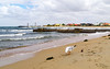 beachcomber (Tatterededges) Tags: beach ocean seascape waterscrape seagull waves clouds pipe melbourne landscape town seaside dogwood52 dogwood2017 beacheslandscapes
