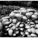 cluster of fungi