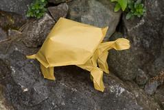Tortoise ( Philogami) Tags: art animal paper origami tortoise hung nguyen cuong philogami satogami