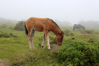 pony 05