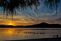 Elk Lake, Saanich, BC - sunset with the Canadian Geese (Freshairphotography) Tags: sunset lake clouds geese canadiangeese afterglow saanich elklake beautifulbc