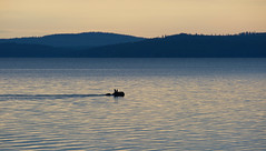 Early Morning Swimmer (@Tuomo) Tags: lake night swimming finland nikon df moose nikkor pf päijänne jämsä 300mm4 kotaniemi
