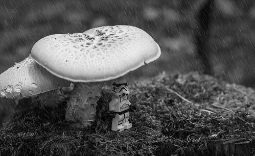 Singing in the rain . . .
