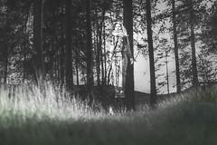 Haunted (miikajom) Tags: people blackandwhite blur color nature grass forest photoshop suomi finland dark photography 50mm ghost haunted seethrough float puu metsä hover levitate nurmikko mustavalkoinen kummitus läpinäkyvä