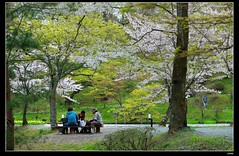 nEO_IMG_DP1U3782 (c0466art) Tags: park old trip travel flowers light green castle pool beautiful japan canon season spring scenery afternoon bloom sakura 2015 trres 1dx c0466art