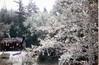 Disneyland 1967 (jericl cat) Tags: disneyland 1967 1960s frontierland riversofamerica burning cabin disney anaheim