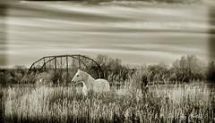 Dec 2011 - Rairden (lazy_photog) Tags: lazy photog elliott photography sepia rairden bridge big horn county beautiful horses watching