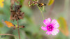 Flowers and bees (omardaing) Tags: spring color nature macro floral closeup plant green insect pink garden purple bee bug çiçek pentax k10d böcek flower arı