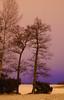 Light on ice (STTH64) Tags: tree sea seaside evening dusk ice snow winter purple