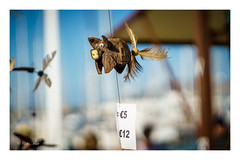 Flying Pig - 2016-11-19 10-38-21 - DSC08104-1 (colin.mair) Tags: 58mmmanuallens helios442 lanzarote pig toy market sony ilce6000