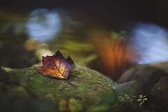 Lost in reverie (Tammy Schild) Tags: leaf rocks stones water reflection autumn colorful fall october serene nature 135l