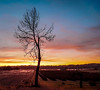 Loner (Heli Hansen) Tags: sunset tree loner alone sky colorful skien norway winter