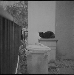 0810 (nori 4) Tags: cat flexaretll mirar8035 shanghaigp3 d76 11 littledoglaughednoiret
