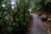 山中遊031 (kingston Tam) Tags: moss grass path hillside hiking field bigtree oddtree garden nature fujifilmxt1