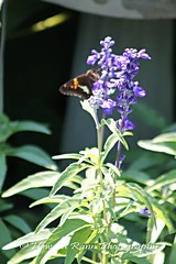 Mercer County Gardens (130) (Framemaker 2014) Tags: fernbrook farms chesterfields new jersey mercer county united states america