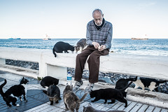 Cat Man-DSC_3689 (thomschphotography3) Tags: oldman oldage man cats feeding spain canaryislands grancanaria laspalmas lonliness poverty animals
