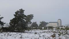 P1180024-6.jpg (loenatik) Tags: assel gelderland kootwijk nature nederland radiokootwijk sneeuw snow tree winter sky