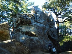 Castle Rock on the Castle Rock Trail (jenesizzle) Tags: castlerock castlerockstatepark castatepark redwoods rockformations tafoni outdoors landscape hiking