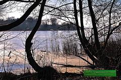 Bäume am Seeufer in der Wintersonne (TiBoFo) Tags: landschaft wald tibofotinoboczikfoto winter laubbaum bäume binnensee ufer tiefstehendewintersonne germany deu