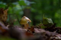 DSC_5109 (Keztik) Tags: wood canada mushroom forest de reflex nikon quebec sherbrooke dslr foret parc chemin spore champignon bois sanctuaire beauvoir d3200 beauvoire