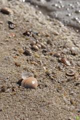 North Sea Shell (petrOlly) Tags: sea shells beach nature water germany island deutschland europa europe bokeh shell natura northsea sylt nordsee przyroda morze