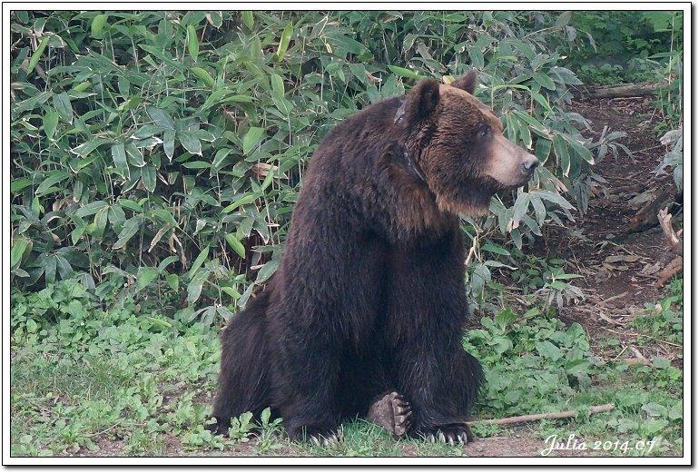 熊牧場 (10)