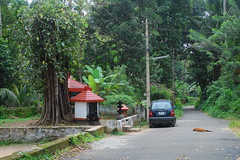 Trikkur, Thrissur (ramkumar999) Tags: temple 50mm nikon kerala nikkor f18 ai surroundings thrissur d40 bhagavathy trikkur purayamkavu
