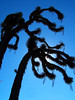 ...Some Strange Creatures? (J Swanstrom (Never enough time...)) Tags: blue sky tree silhouette kodak joshua dx7590 jswanstromphotography