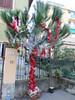Italy - Liguria - Santa Margherita Ligure - Christmas tree (JulesFoto) Tags: italy centrallondonoutdoorgroup clog ligure santamargheritaligure christmastree