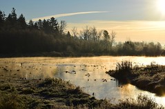 (careth@2012) Tags: mist misty sunrise winter scene scenery scenic view lake atmospheric mood landscape reflection geese goose wildlife sky