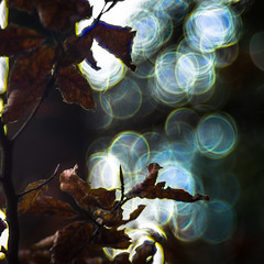 Creativity (*Capture the Moment*) Tags: 2016 autumn backlight backlit bavaria bayern bubblebokeh bubbles deutschland gegenlicht germany hackensee herbst lakehackensee meyergörlitztrioplan10028 meyeroptikgörlitztrioplan10028 seifenblasenbokeh sonya7m2 sonya7mii sonya7mark2 sonya7ii trioplan28100neo