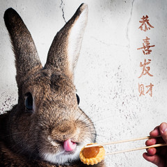 Chinese New Year 2017 (Jeric Santiago) Tags: animal bunny chinesenewyear conejo hase kaninchen lapin pet pineappletart rabbit tongue winterrabbit うさぎ 兎