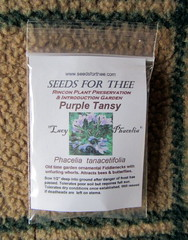 Purple Tansy Seeds (genesee_metcalfs) Tags: seeds herb tansy