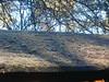 Kleinmachnower Impressionen - Dezember 2016 - 17 (Thorte Berlin) Tags: kleinmachnow natur kleinmachnowernatur kleinmachnowerimpressionen impressionen erdboden frost wasser raureif eiskristall eis kristall eiskristalle gras gräser strauch blatt blätter winter winterzeit kälte brandenburg deutschland germany ice icecrystal frostintheair iceneedles grass bush bushes leaves