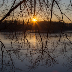 branching out in Explore (t s george) Tags: sunrise cold golden tree branches silhouette newengland canon5dmarkii