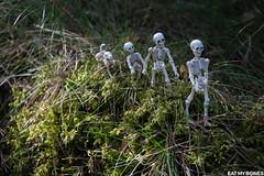 Eat my Bones (Pose skeleton) Utö, Sweden (EatMyBones) Tags: bones miniature nature poseskeleton rement skeleton sweden toy