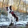 Und auch der Schnee ist zum Glück noch da in den Waldsenken. Kalt isses auch. . Das sieht sehr schön aus im Sonnenschein. #bordercollie #bordercolliesofinstagram #border #hütehund #hütehunde #herdingdog #herdingdogs #doglover #doglove #redbordercollie #do (wandklex Ingrid Heuser freischaffende Künstlerin) Tags: ifttt instagram malaika bordercollie border hund dog wandklex privat private familie family meetthemaker huetehund herdingdog dogslife